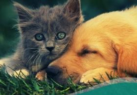 Pets no Pós Transplante